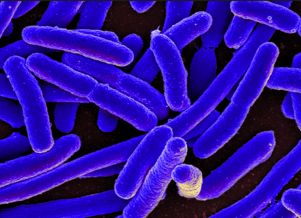 Gut bacteria and their connection to the brain